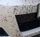 Удаление насекомых
